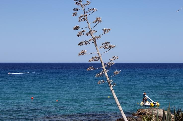 Cyprus News