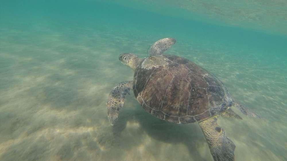 Dead green turtle found with 183 pieces of plastic in its gut in Cyprus 13