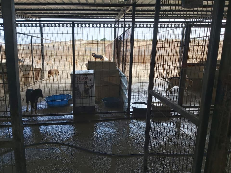 Life at the Iskele Dog Shelter 41
