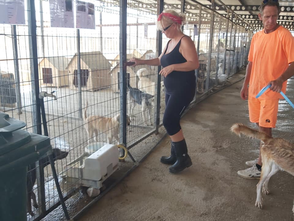 Life at the Iskele Dog Shelter 52