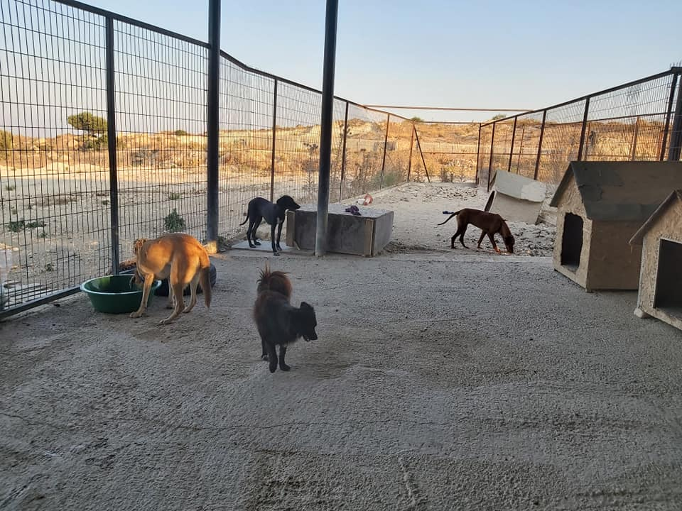 Life at the Iskele Dog Shelter 57