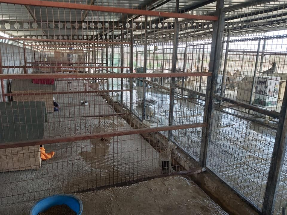 Life at the Iskele Dog Shelter 40