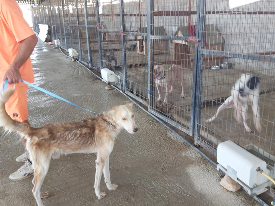 Life at the Iskele Dog Shelter 53