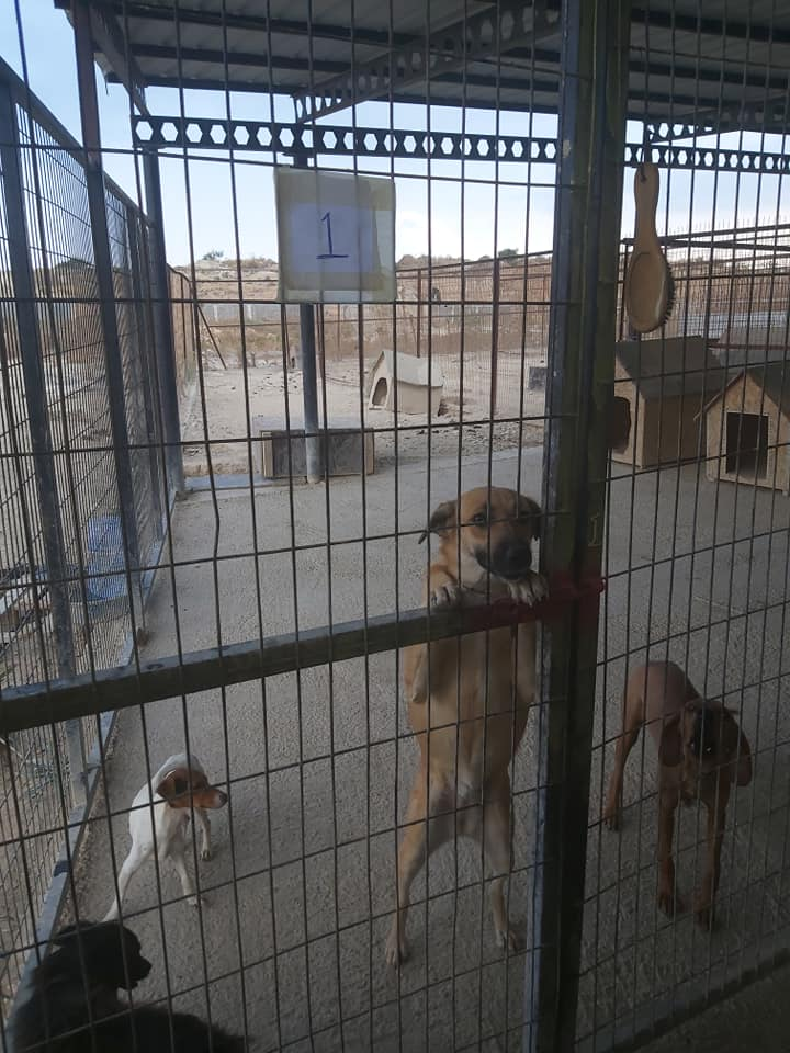 Life at the Iskele Dog Shelter 42
