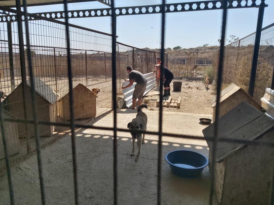 Life at the Iskele Dog Shelter 59