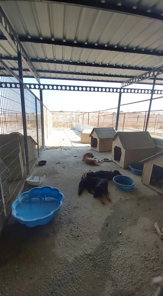 Life at the Iskele Dog Shelter 63