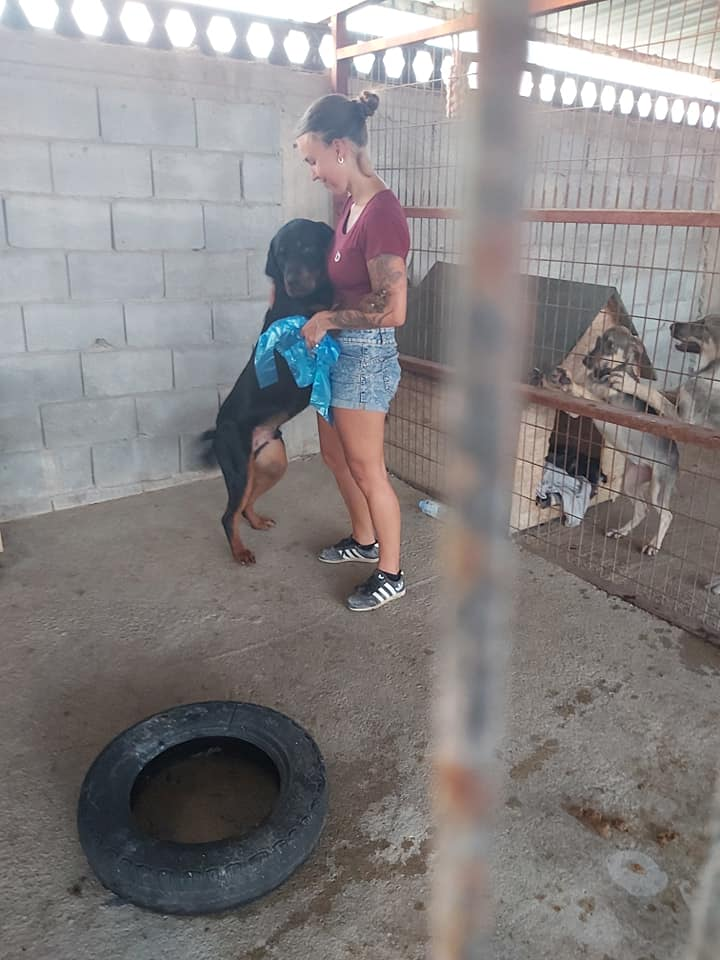 Life at the Iskele Dog Shelter 65