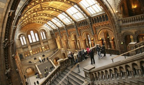 uk london natural history museum great hall panorama photo24 1122am 3