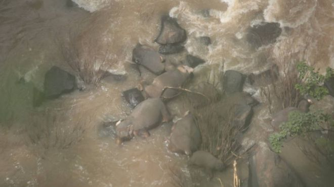 Six elephants die trying to save each other at Thai waterfall 1