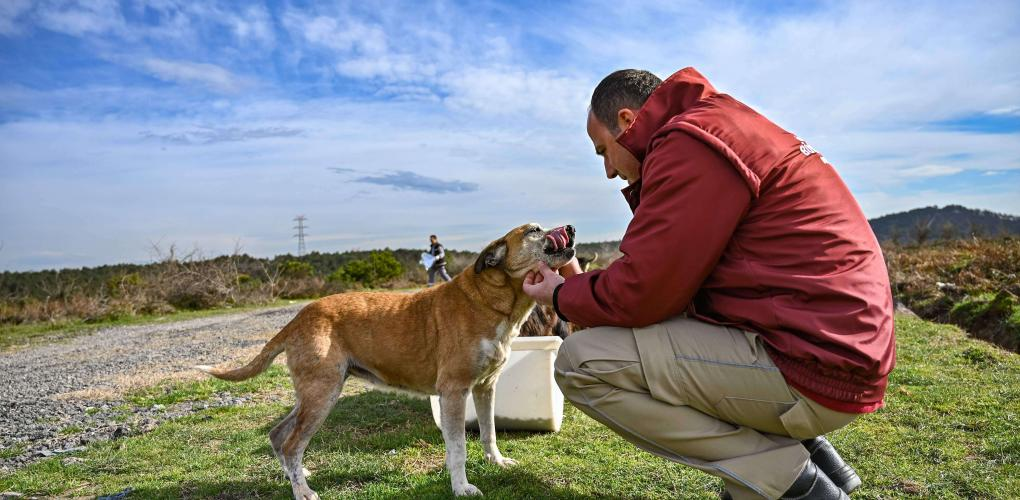 Turkey's street animal love stronger than political polarisation 12