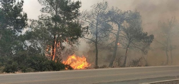New red alert from Forestry Department after a day of fires (Video) 21