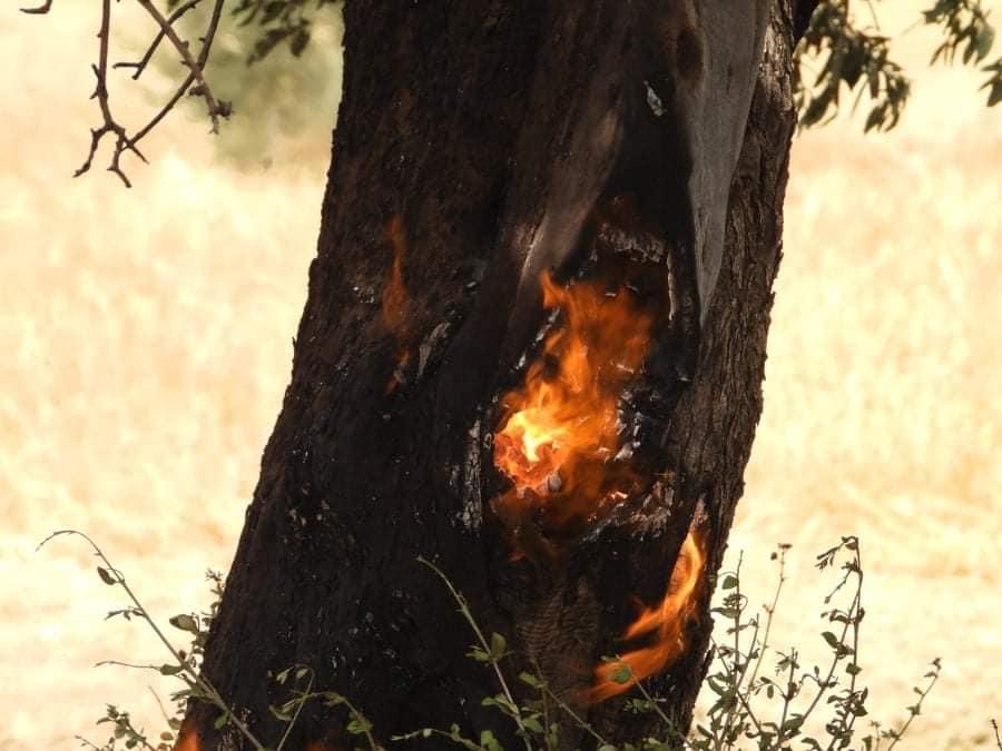 Fire between  Sınırüstü & Altınova Iskele (Video) (Update) 29