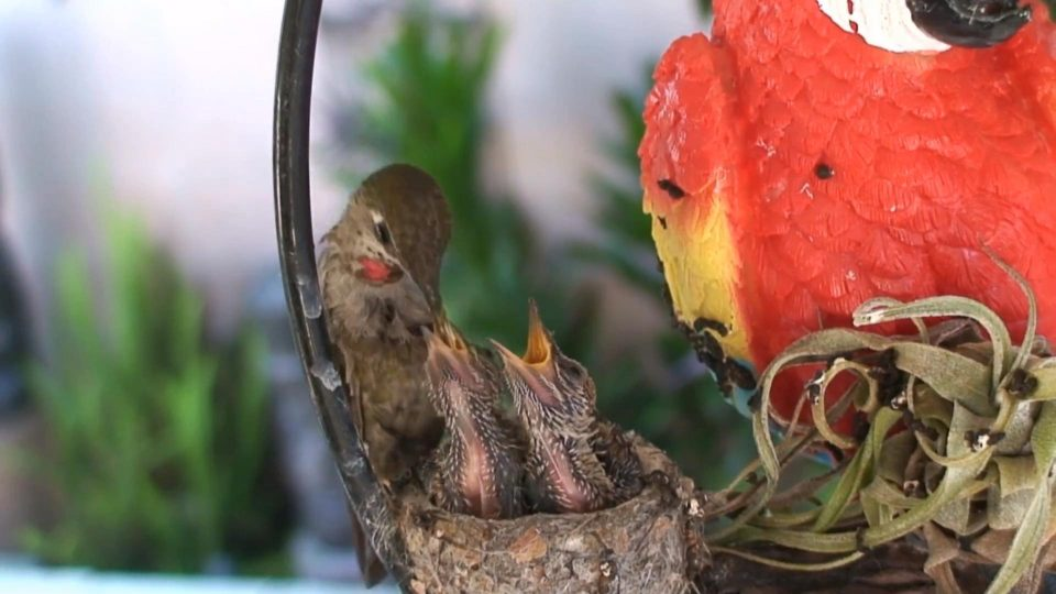 Bird Feeds Their Young Ones Lovingly