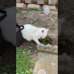Cat Rummages Through Catnip Stash Planted in Neighbor's Yard