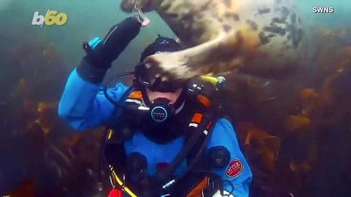 Curious Cute Seal Investigates Diver's Headgear!