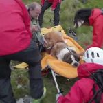 Daisy the St Bernard dog turns the tables as she's rescued from a mountain