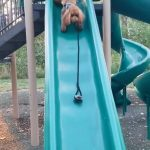 Disinterested Dog Jumps Off While Being Made To Go Down Slide