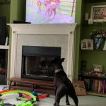 Dog Barks at TV While Looking at Animals on Pets Show