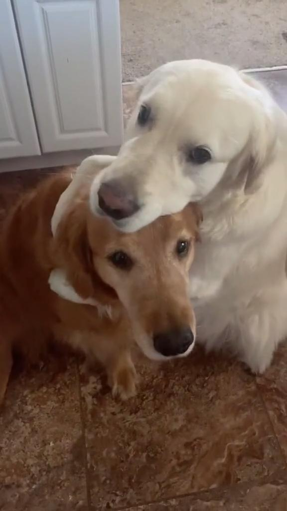 Dog Hugs Another Dog to Apologise for Eating Their Chewy