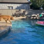 Dog Jumps onto Pool Float to Grab Toy