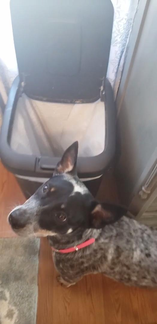 Dog Learns To Open Dust Bin Lid To Help Her Owner