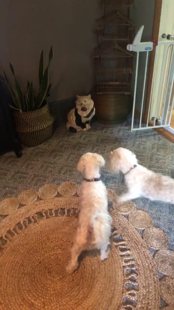 Dogs Bark At Ceramic Cat In Living Room