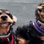 Dogs Pose For Camera With Huge Smiles as Heavy Winds Reveal Pearly Whites