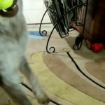 Excited Dog Taps Paws While Playing Fetch With Owner
