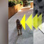 Exotic Cat Roaming Posh London Neighborhood Suspected of Feeding on Pets and Local Animals!
