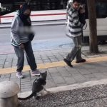 Feisty Cat Charges at Passerby in Street