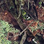 Lion Around! Take a Look at These Lions Napping in a Huge Tree
