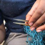 People Rescue Oriental Darter Bird With Beak Stuck in Thread