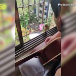 Rockin' Robin! Watch These Two Parrots Join in Singing Along With Musician Outside of Window!