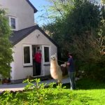 Special Delivery! Llamas Make Food Deliveries to Remote Residents