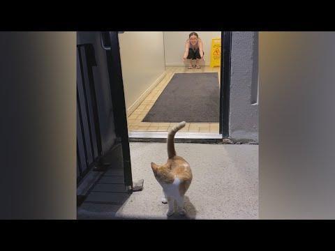 Stray Cat Follows Couple Into Their Apartment