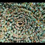 The Umbrella Academy Season 2 | Official Trailer | Netflix
