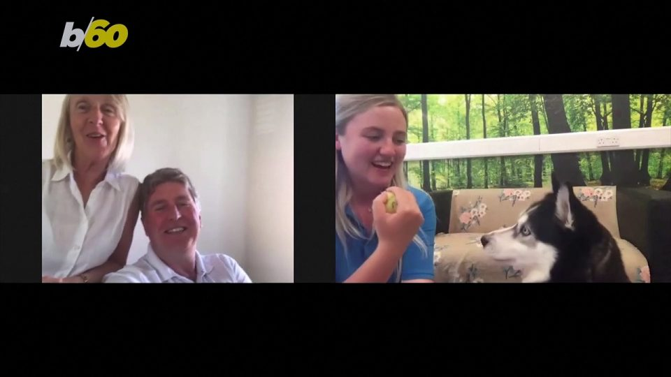 This Charity Uses Video Calls to Get Pets Their Forever Homes During the Pandemic