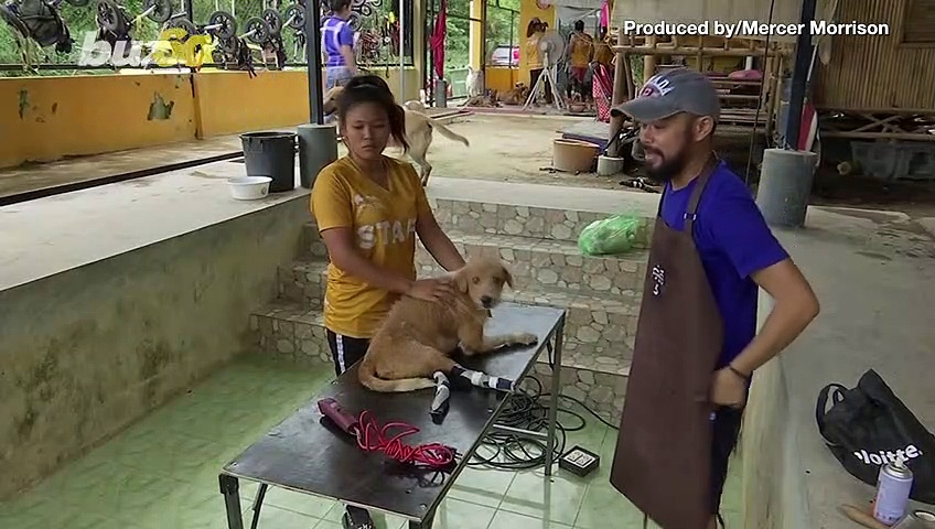 Volunteer Taiwanese Dog Groomer Returns as Lockdown Eases to Help Stray Shelter Dogs