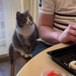 Cat Asks For Sushi While Owner Eats