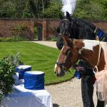 Check Out This Amazing Video of Two Horses Tying the Knot in a Special Ceremony