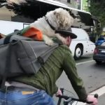 Dog Sits Comfortably on Owner's Back While he Rides Bicycle in Town