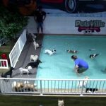 Hot Dog! Dubai Doggie Daycare Has Water Park to Let Panting Pooches Cool Down!