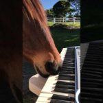 Rescue Horse Uses his Mouth to Play Piano