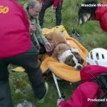 Role Reversal! This St. Bernard Had to be Rescued from a Mountain