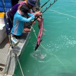 Sharks From Water Snatch Bait Fish From Boy's Hand on Boat