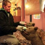 Watch These Adorable Orphan Bears Being Released Into the Wild