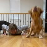 Puppy Imitates her Owner and Does Pushups During Quarantine